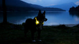 LED Safety Dog Collar Giveaway