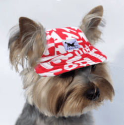 Small Dog Baseball Cap