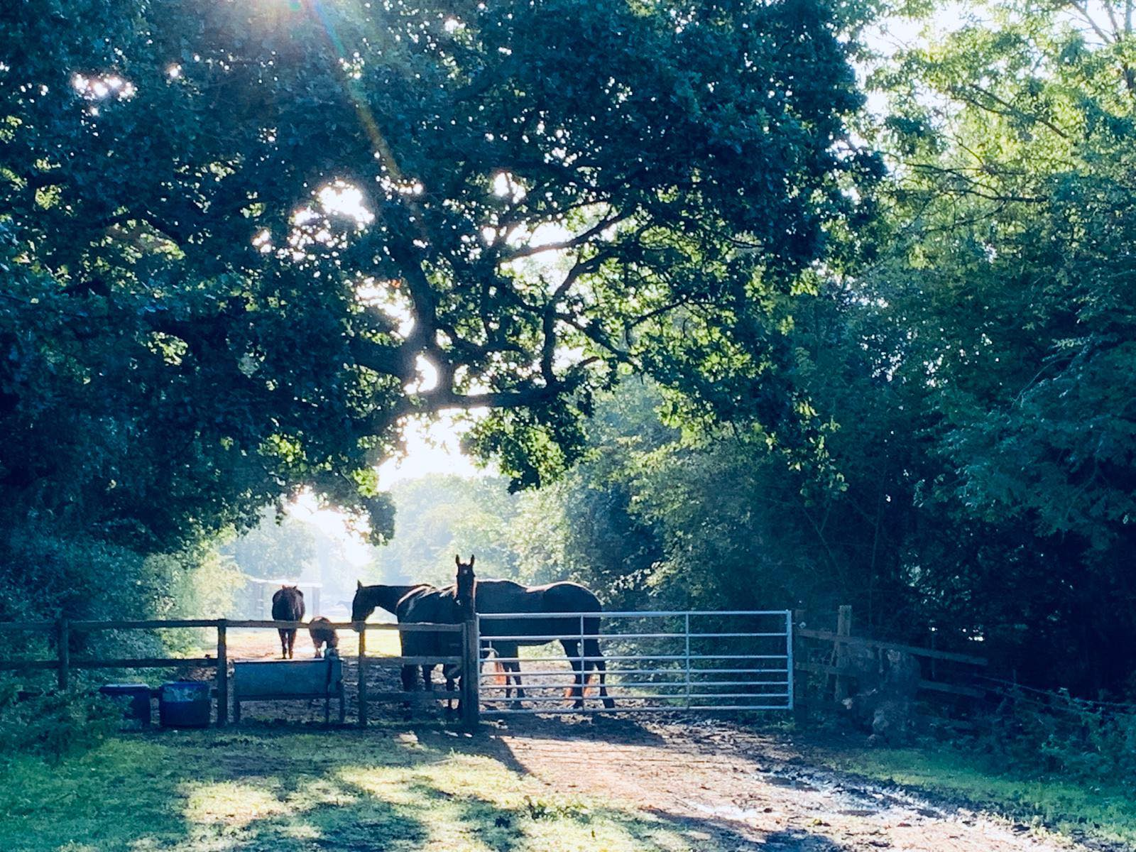 Equine Therapy - Using Horses to Aid Human Physical and Mental Health