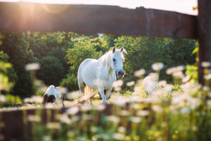 Fun Facts You Never Knew About Horses