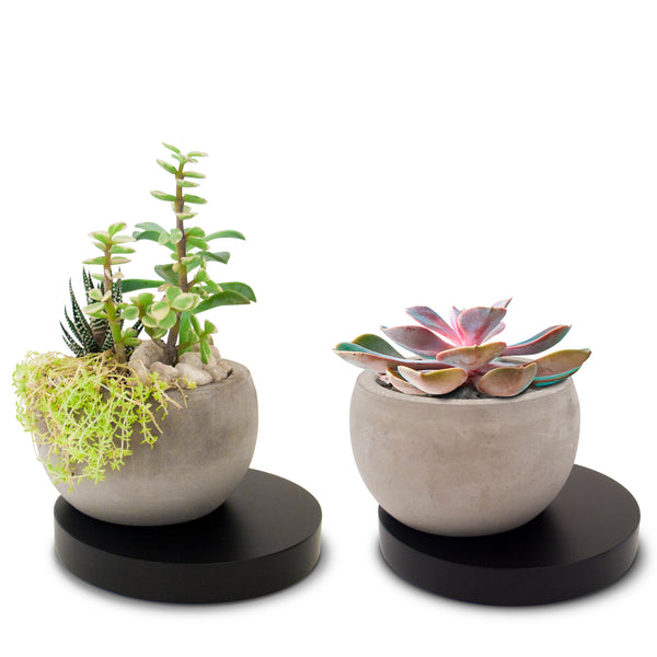 Concrete Succulent Planter with Black Wooden Base (2 Pack)
