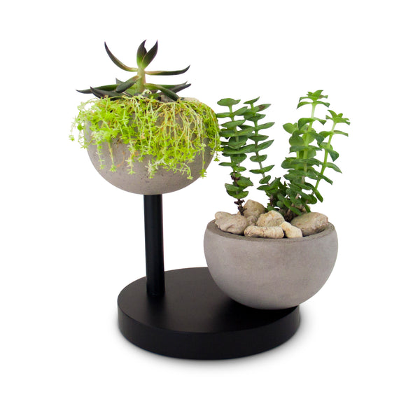 Two Concrete Succulent Planters with Wooden Base