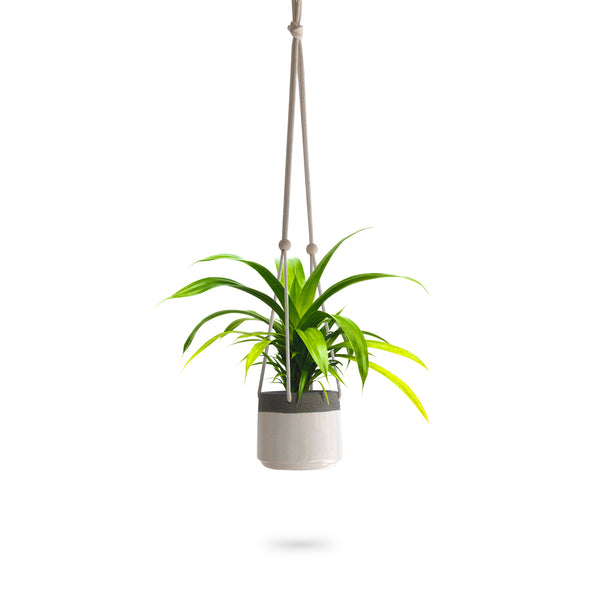 Two-Tone Textured Glaze Ceramic Hanging Planter