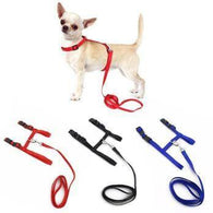 Adjustable Pet Collar Harness And Leash-Safety-Pets Hub Home