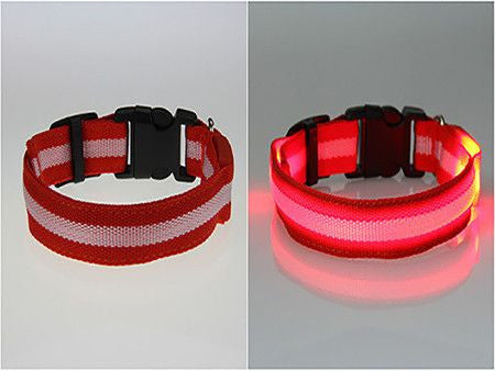 Dog LED Safety Glow Collar-Safety-Red-M-Pets Hub Home