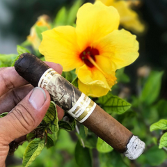 Cigars in Summer Paradise
