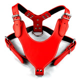 Large Dog Leather Harnesses