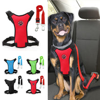 Rottweiler Vehicle Restrainer With Safety Belt