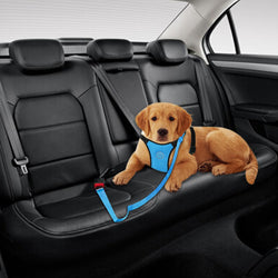 Golden Retriever Vehicle Restrainer With Safety Belt