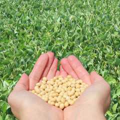 Organic vs. Non-GMO Soybeans