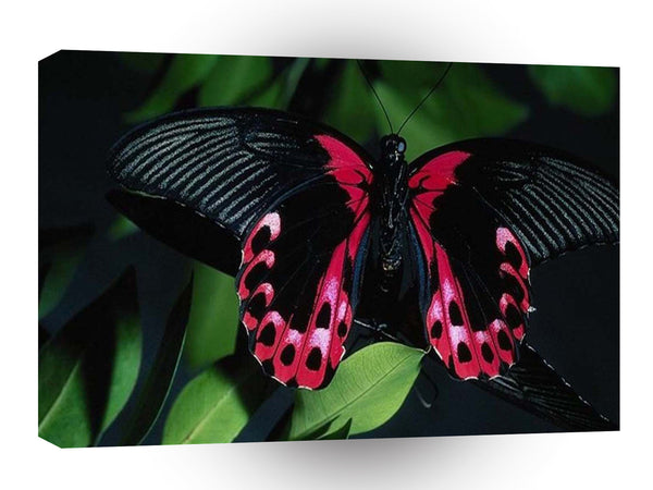 Abstract Animal Elegant Butterfly A1 Canvas