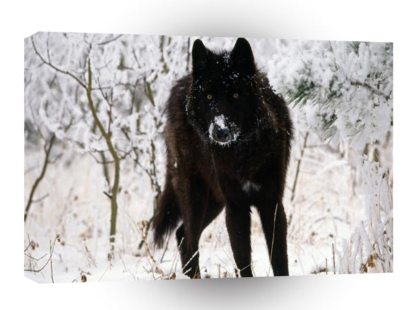 Abstract Animal Winter Wolf Hound A1 Canvas