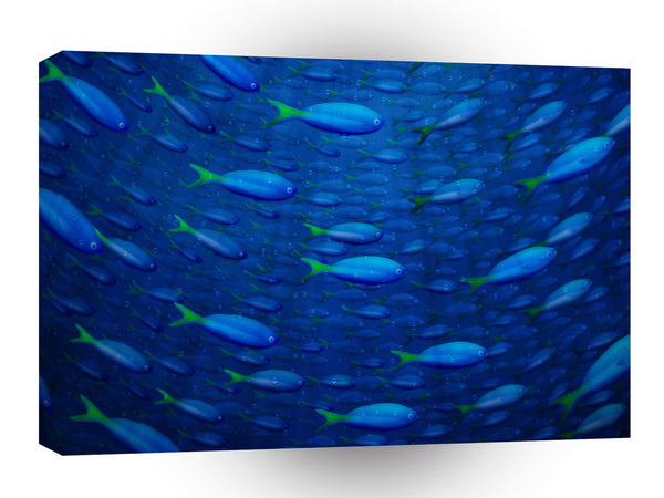 Abstract Animals Circle Of Fish Swimming A1 Canvas