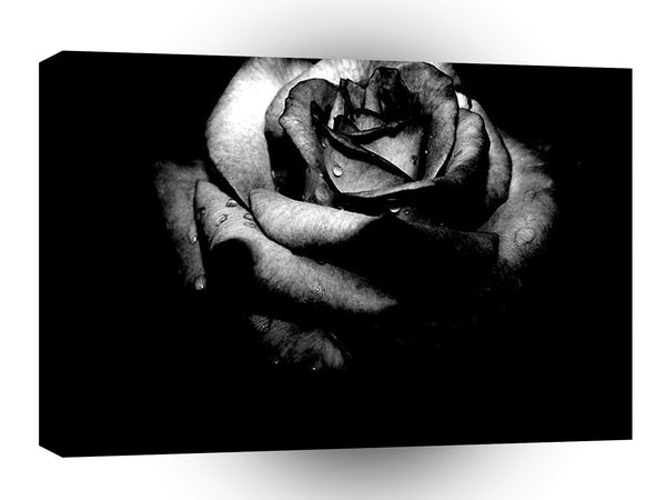 Abstract Flower Black Rose A1 Xlarge Canvas