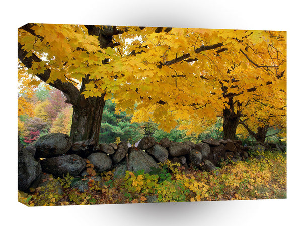 Autumn A Golden Season In New England A1 Xlarge Canvas