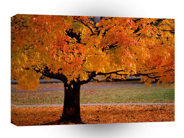 Autumn An Beauty A1 Xlarge Canvas