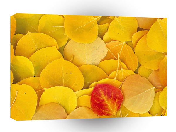 Autumn Aspen Leaves Eastern Sierra California A1 Xlarge Canvas