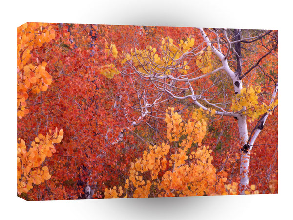 Autumn Aspen Trees City Of Rocks Idaho A1 Xlarge Canvas