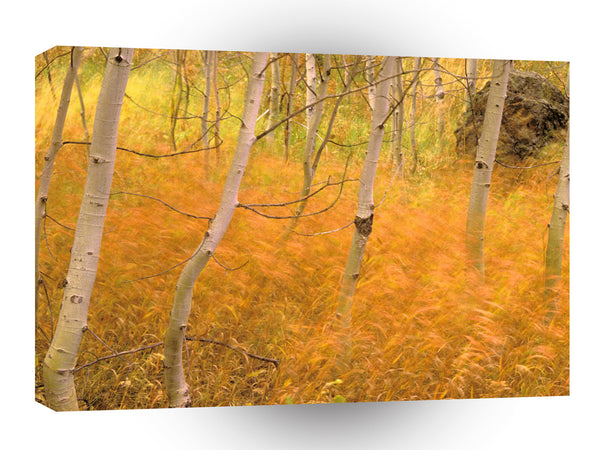 Autumn Aspens And Windblown Grasses Idaho A1 Xlarge Canvas