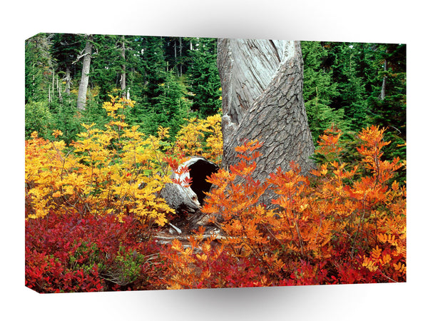 Autumn At Heather Meadows North Cascades A1 Xlarge Canvas