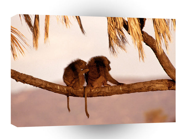 Baboons Companionship Kenya Africa A1 Xlarge Canvas