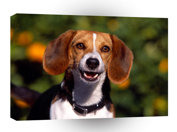 Beagle In The Mood A1 Xlarge Canvas