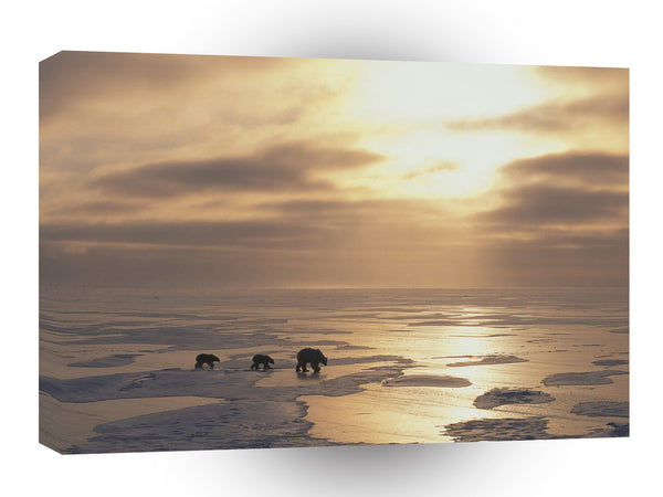 Bear A Walk Towards Heaven A1 Xlarge Canvas