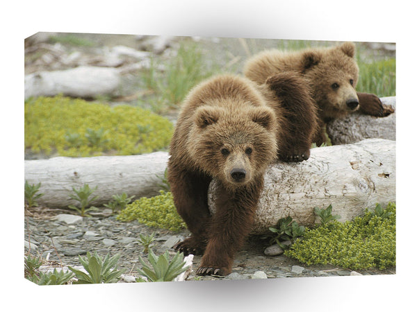 Bear Alaskan Playtime Brown Cubs A1 Xlarge Canvas
