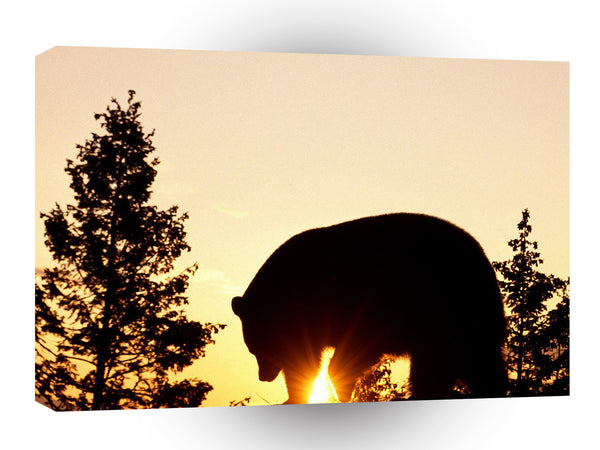 Bear Black At Sunrise A1 Xlarge Canvas
