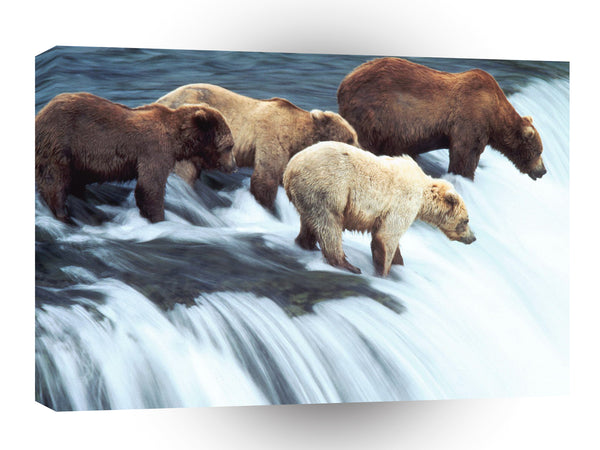 Bear Brown Katmai National Park Alaska A1 Xlarge Canvas