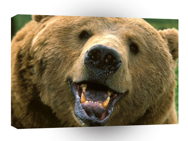 Bear Grin It A1 Xlarge Canvas