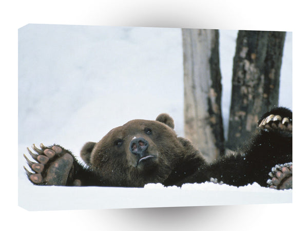 Bear Help Brown Alaska A1 Xlarge Canvas