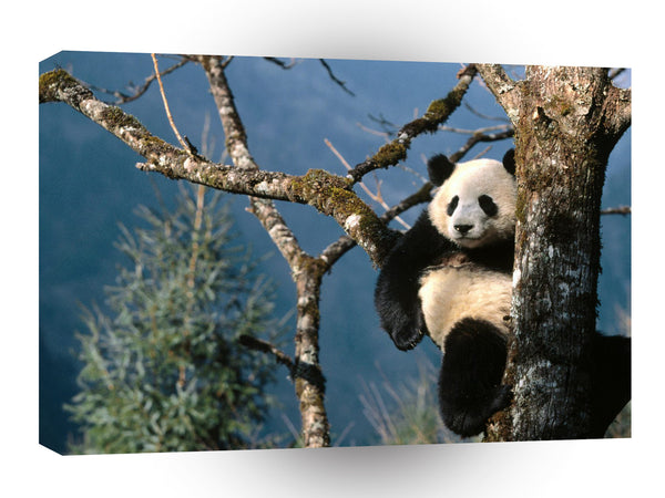 Bear Natural Recliner Giant Panda A1 Xlarge Canvas