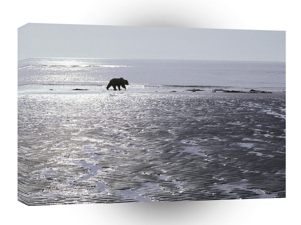 Bear Patrolling Mud Flats Brown Alaska A1 Xlarge Canvas