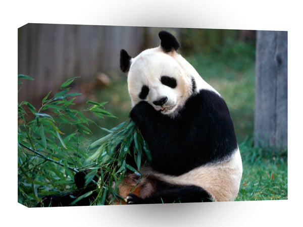 Bear Snack Time Panda A1 Xlarge Canvas
