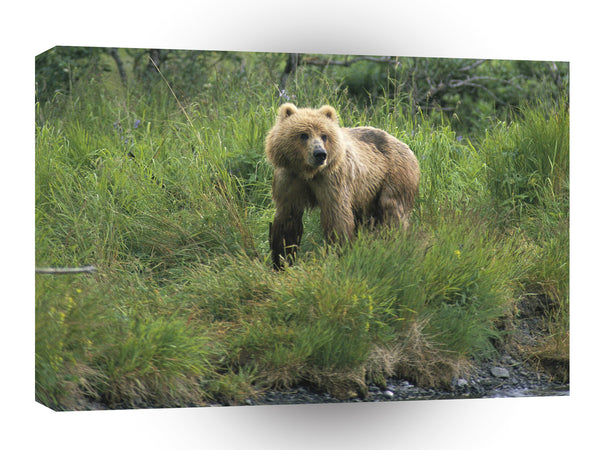 Bear Watch Brown Alaska A1 Xlarge Canvas