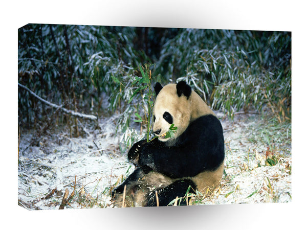 Bear Winter Feast Giant Panda A1 Xlarge Canvas