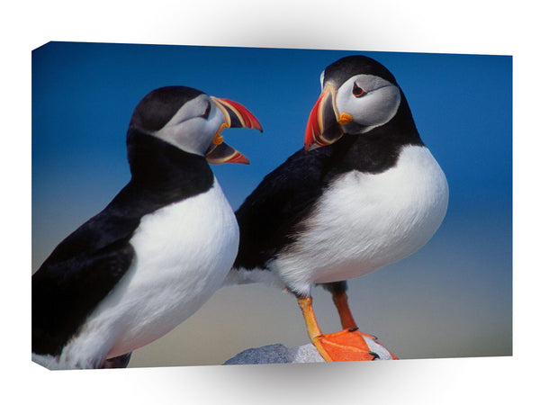 Bird A Pair Of Puffins A1 Xlarge Canvas