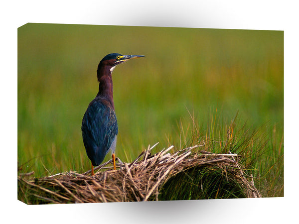 Bird A Quiet Moment Green Heron A1 Xlarge Canvas