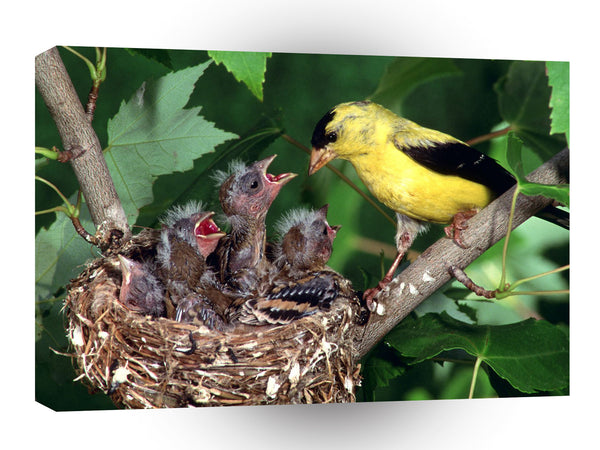 Bird American Gold Finch Family A1 Xlarge Canvas