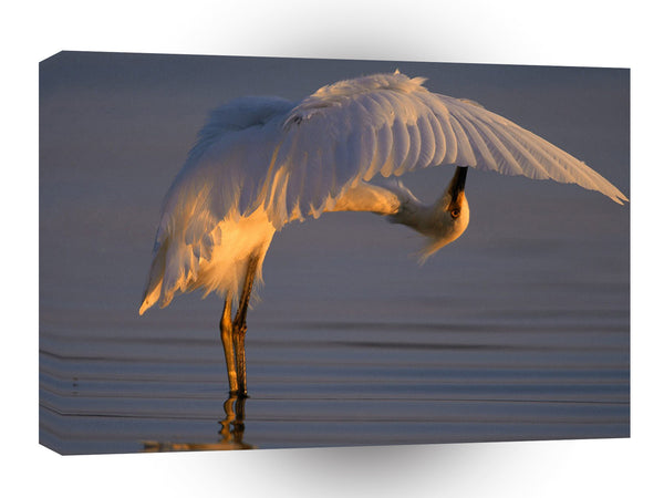 Bird Bending Over Backwards Snowy Egret A1 Xlarge Canvas