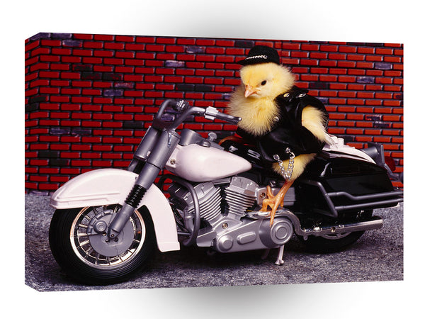 Bird Biker Chick A1 Xlarge Canvas