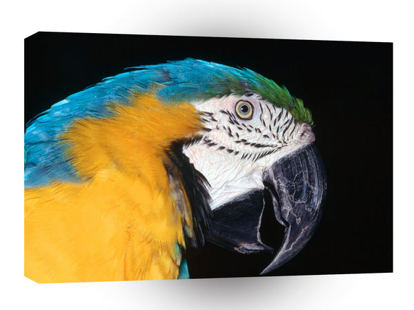 Bird Blue And Yellow Macaw A1 Xlarge Canvas