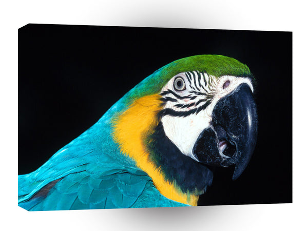 Bird Blue And Yellow Macaw Parrott A1 Xlarge Canvas