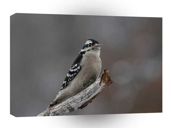 Bird Egggray Winter Perch A1 Xlarge Canvas
