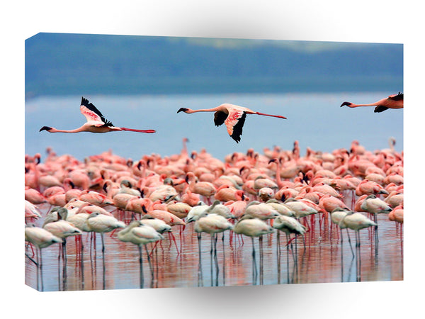 Bird Flamingos Lake Nakuru Kenya A1 Xlarge Canvas