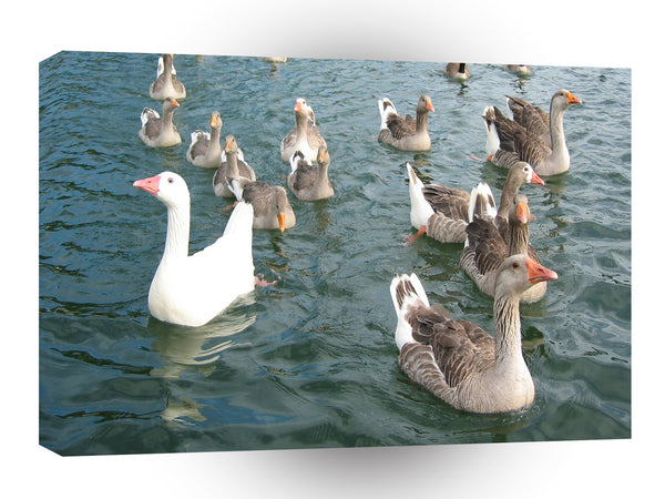 Bird Geese Parade A1 Xlarge Canvas