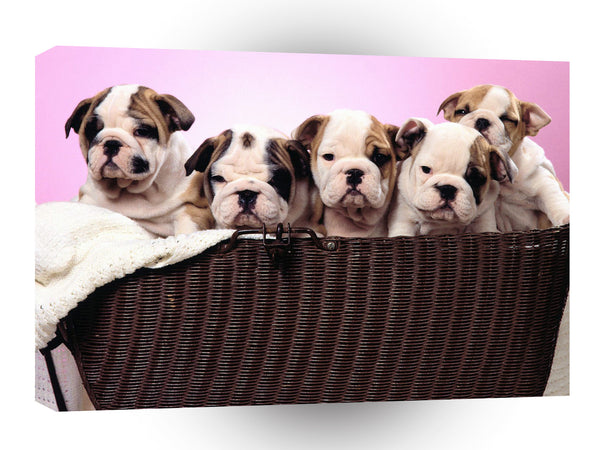 Bulldog Basket Cases A1 Xlarge Canvas