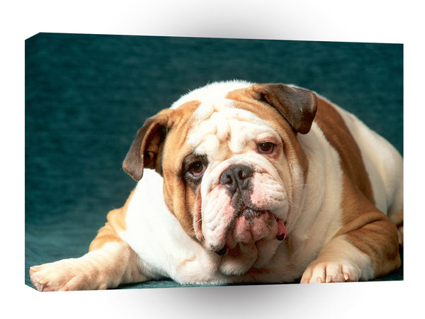 Bulldog Bone To Pick With You A1 Xlarge Canvas