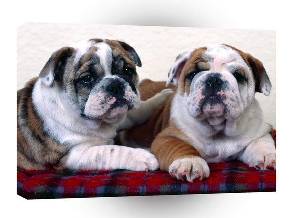 Bulldog Buddies A1 Xlarge Canvas